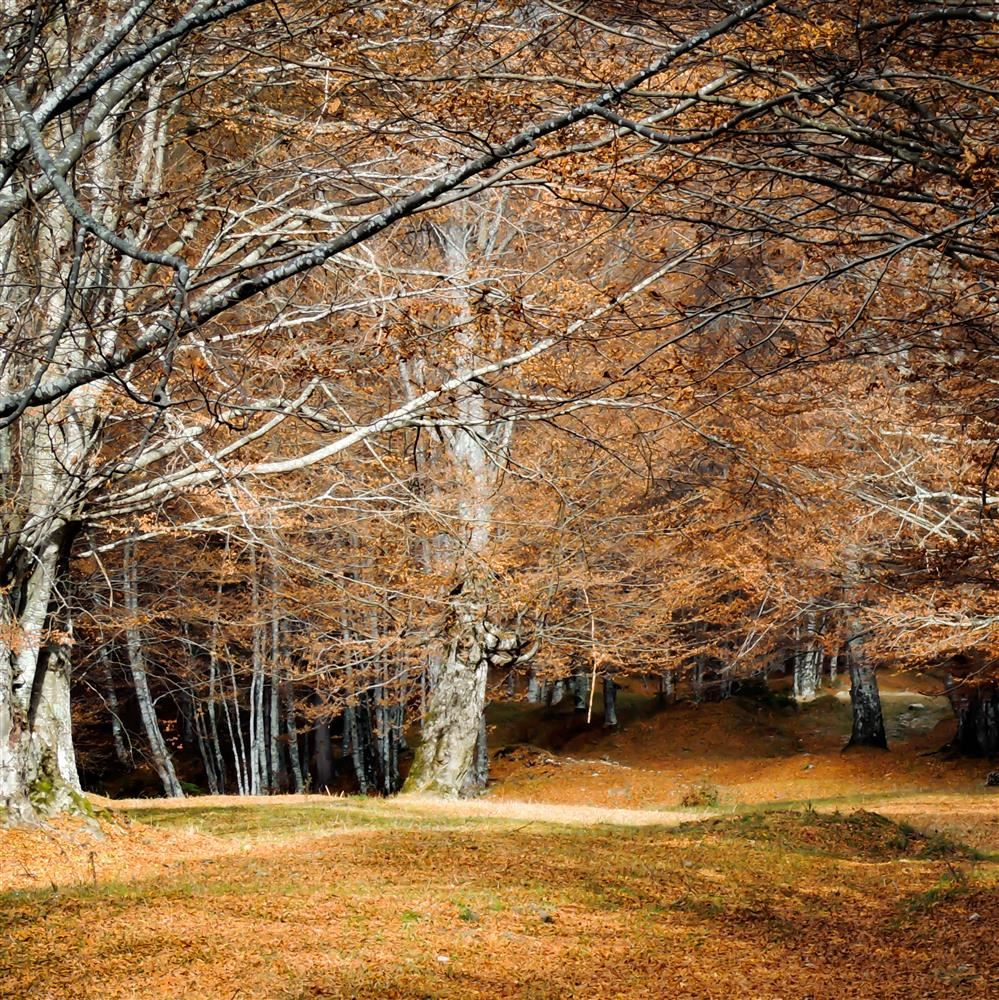 Autumn trees: Photo by Andreea Simion